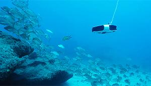 Navatics MITO Underwater Drone_Lifestyle_03_THN