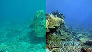 Navatics MITO Underwater Drone_Colorcorrection01_THN