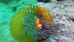 Navatics MITO Underwater Drone_Colorcorrection02_THN