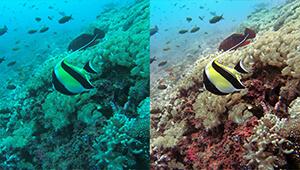 Navatics MITO Underwater Drone_Colorcorrection03_THN