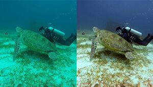 Navatics MITO Underwater Drone_Colorcorrection04_THN